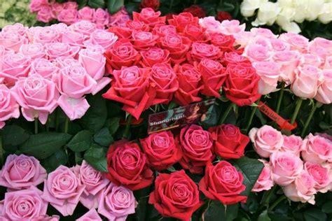 Bouquet Buket Bunga Flanel 12cm Warna Merah Putih Mutiara 1 bunga mawar pink toko bunga di jakarta barat florist