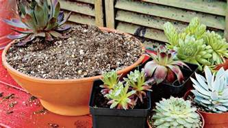How To Propagate Succulents Sunset - how to grow succulents in ultimate guide to succulents