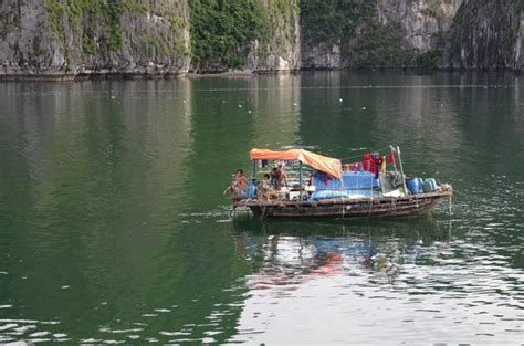 living on a boat with cat family living on a small boat foto de cat ba ventures