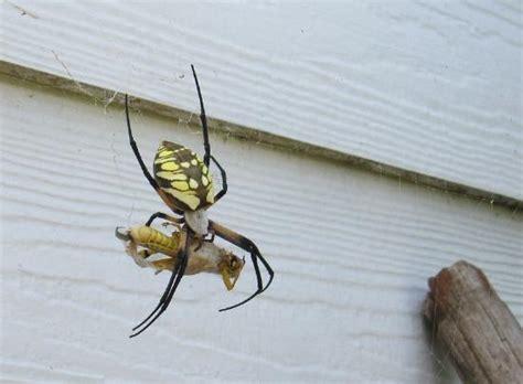 Garden Spider Mn by The Garden Spider