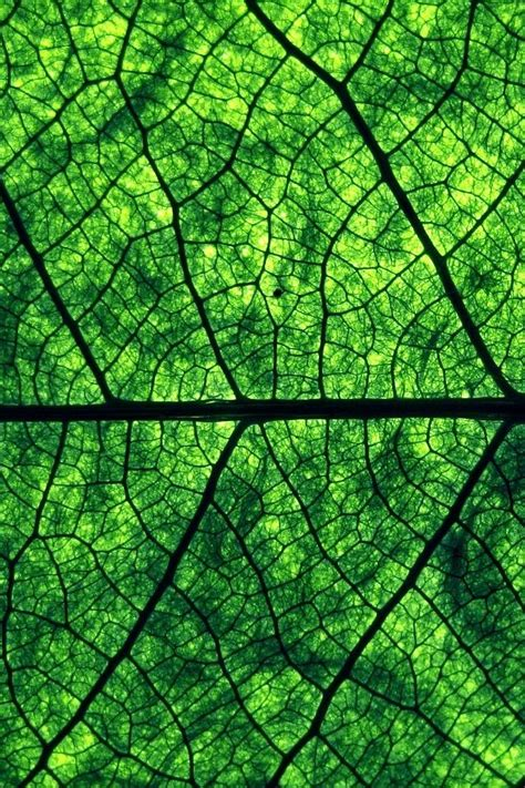 pattern seen in nature 32 best voronoi diagrams in nature images on pinterest