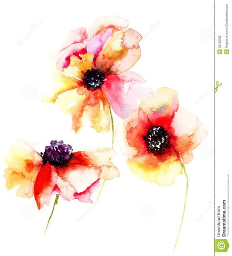 poppy flowers stock illustration illustration of poppy