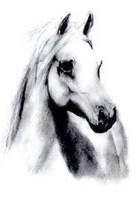 White horse drawing by slippy88 on deviantart