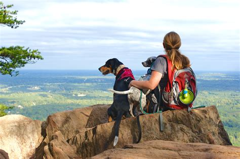 friendly hikes 8 best friendly hikes near with mutts