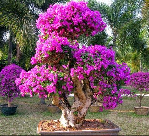 tanaman hias tahan panas  hujan bibit