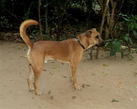 dog houses for sale in india kombai dog information pets world
