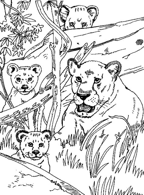 lion pride coloring page lion and lioness colouring pages