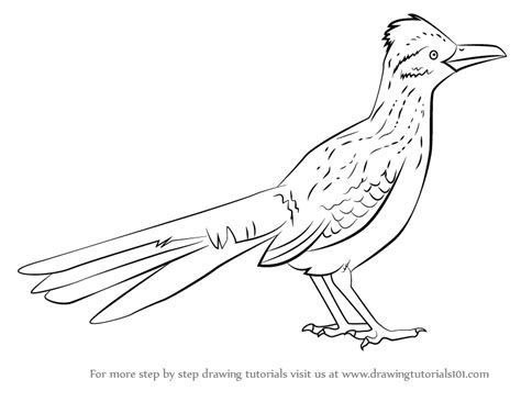 roadrunner bird coloring page realistic toucan coloring pages printable realistic best