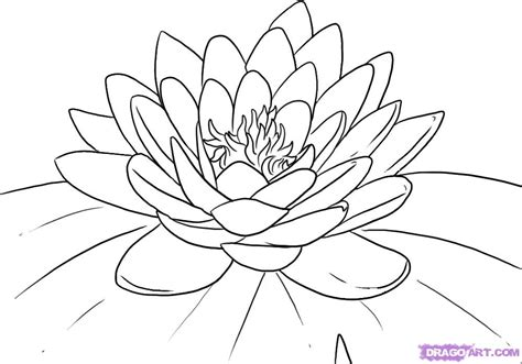 Step 5 How To Draw A Lotus Flower Water Lily Lotus Flower Outline