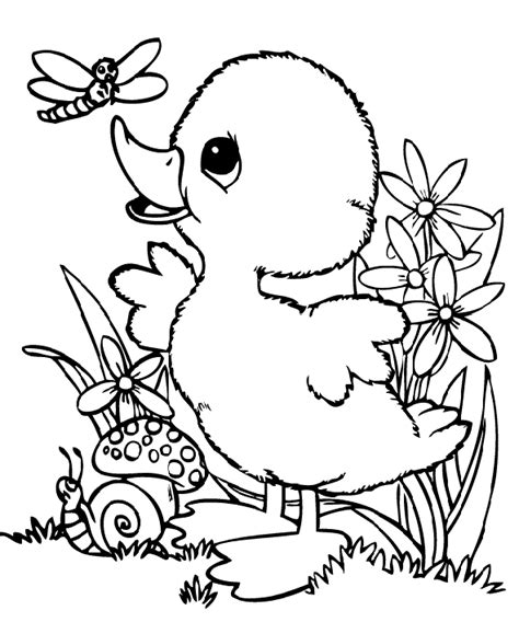 baby ducks coloring page baby duck and dragonfly coloring pages kids coloring