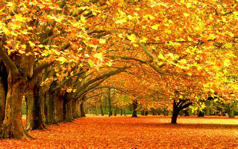 wallpapers autumn leaf fall leaves trees desktop hd