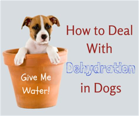hypoglycemia in puppies dehydration