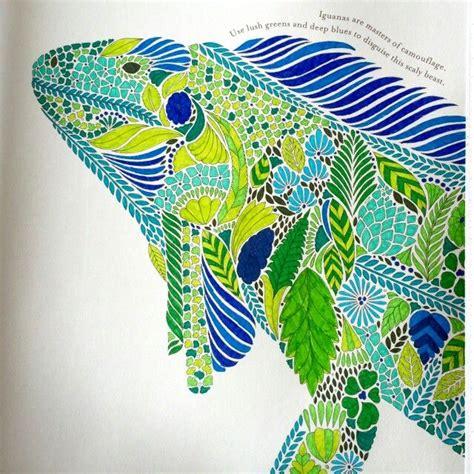 libro millie marottas tropical wonderland mejores 28 im 225 genes de millie marotta mariposas en libros para colorear