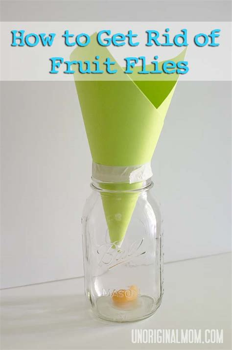 how to get rid of flies in my backyard how to get rid of fruit flies unoriginal mom
