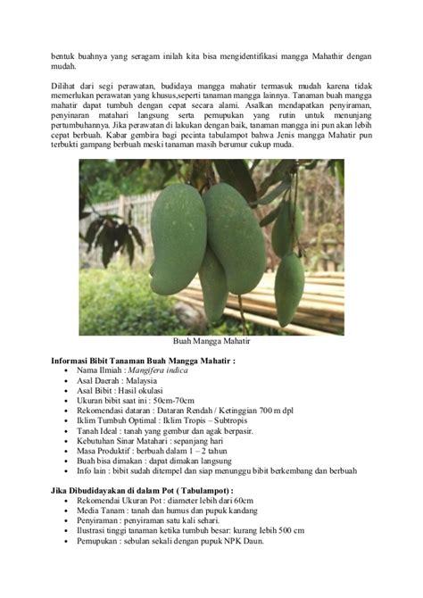 Bibit Mangga Mahatir Murah bibit tanaman murah mangga mahatir update daftar harga