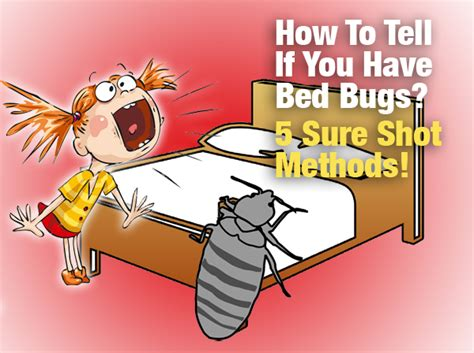 how can i tell if i have bed bugs how to tell if you have bed bugs 5 sure shot methods