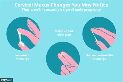 cervical mucus   detect early pregnancy