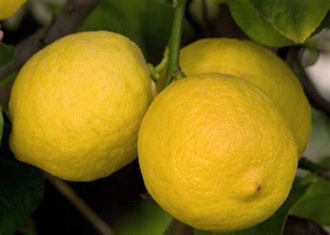 Bicarbonato E Limone Per Pulire by Limone Per Pulire Il Bagno Naturalmente E Bene