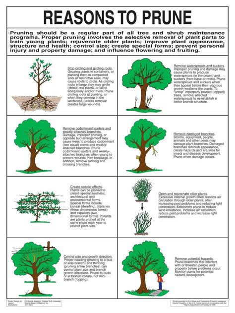how to prune fruit trees best 25 tree care ideas on tree pruning tree
