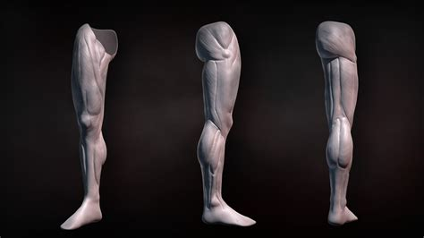 zbrush tutorial human body sculpting human legs in zbrush pluralsight