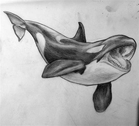 killer whale tattoo killer whale drawing its from a while ago sketch