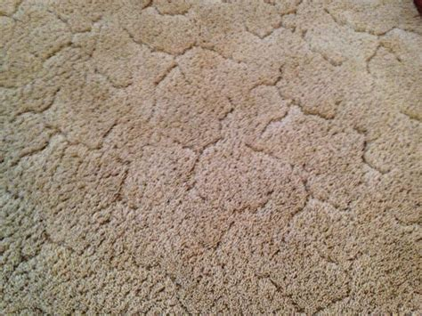 rug stain carpet rug furniture cleaning five step carpet care asheville