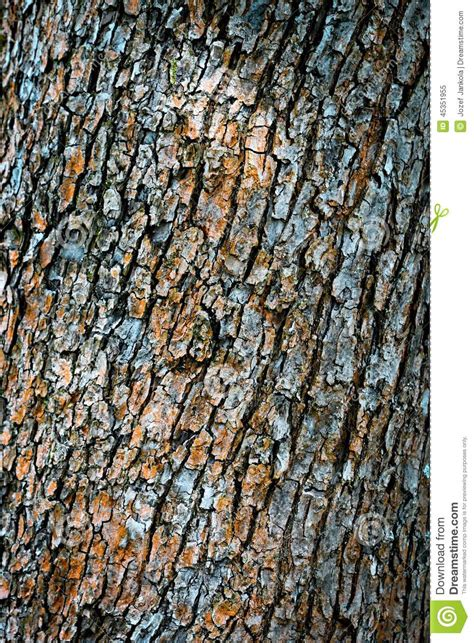 bark color color of dried up tree bark stock image image of wood