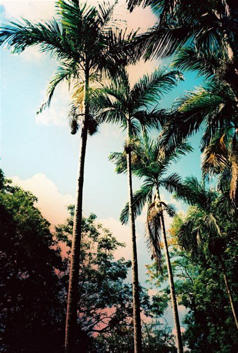 Palm Country Detox by Palms Palm Trees And Wave Hair On