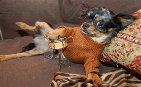 dogs in sweaters 29 dogs that are more fashionable than we ll be the lala