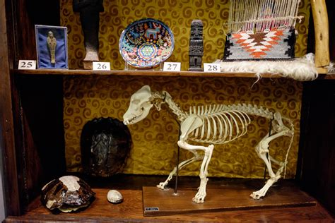 cabinet of curiosities forest news