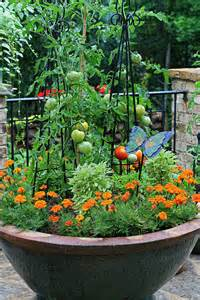 Patio Tomatoes Care by The Graceful Gardener 187 Tomato