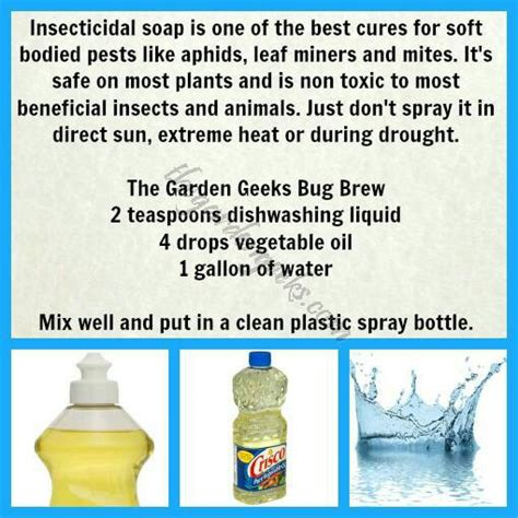 organic garden pest recipe insecticidal soap gardening
