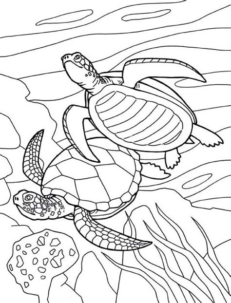 coloring pages sea world free coloring pages of sea world 6673 bestofcoloring com