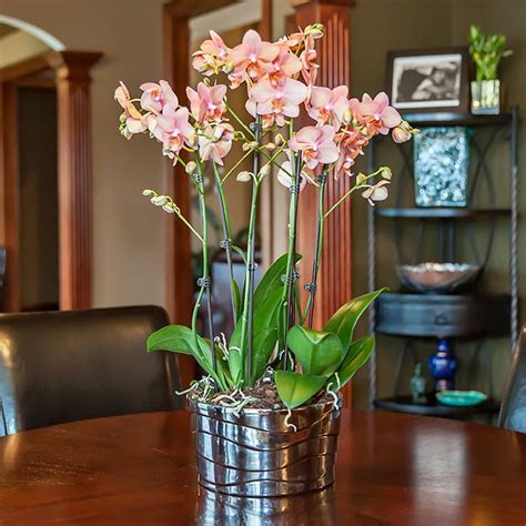 how many orchids is many for one planter
