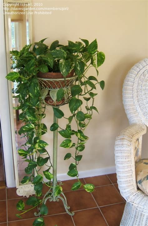 Yang Yang Kitchen by 50 Hiasan Bunga Di Ruang Tamu Minimalis Modern Rumah Impian