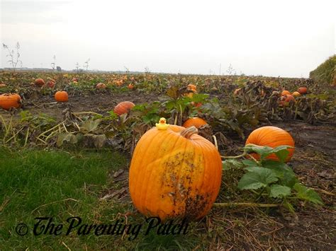 pumpkin rubber st the duck and the pumpkin patch the rubber ducky project