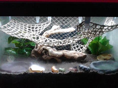 hermit crab heat l hermit crab care my aquarium