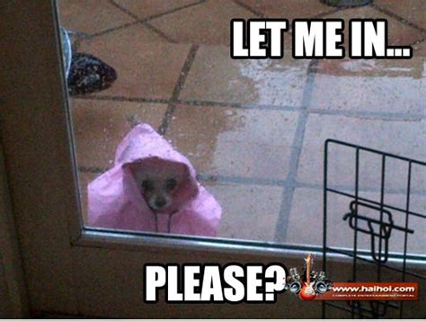 Rainy Day Meme - funny rainy day home videos galleries pictures sms jokes
