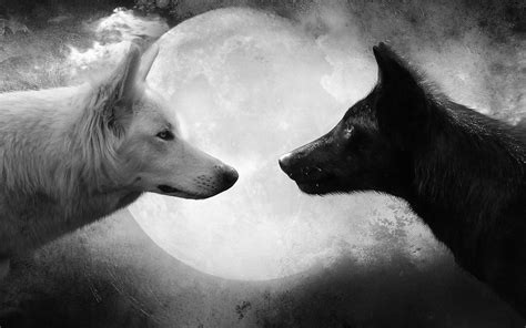Black And White Wolves Wallpaper | black and white wallpapers animals hd animals wallpapers