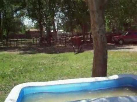 mustang swimming pool duke the mustang in the kid s swimming pool avi