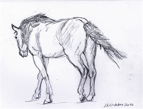 Sketches Horses by Frabjous Musings Sketch 44