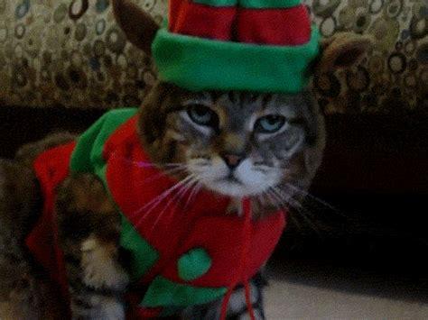 bring the noise the jã rgen klopp story books tilllate die zehn zehn katzen die weihnachten hassen