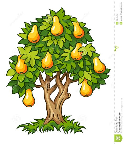 Drawing House Plans Free by Pear Tree With Ripe Fruits Stock Images Image 25919414
