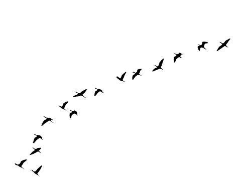 tattoo bird png flying birds tattoo transparent png stickpng
