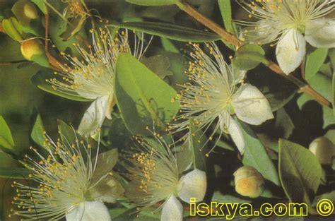 fiori dalle grandi corolle island of ischia natura trekking wanderung