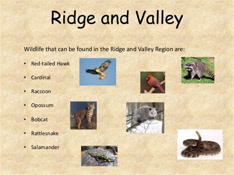 Pictures Of The Ridge And Valley Region