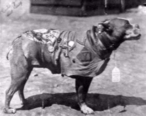 Sergeant Stubby Pictures Sgt Stubby War In Honor Of All Our Veterans All Dogs Are Heros Realneo For All