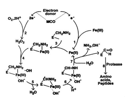 protein oxidation protein oxidation