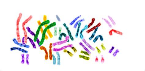 art design genetic screens file karyotype color chromosomes white background png