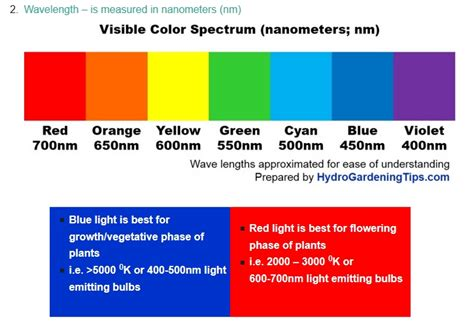 does the color of light affect plant growth image gallery light color and photosynthesis